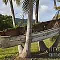 Boat In A Tree Puerto Rico by Bryan Mullennix