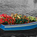 Boat Parade by Aimee L Maher ALM GALLERY