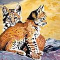 Bob Kittens by Phyllis Kaltenbach