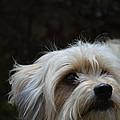 Bob The Dog by Scott Ingram