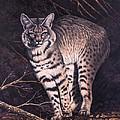 Bobcat by Ricardo Chavez-Mendez