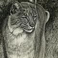 Bobcat Emerging by Sandra LaFaut