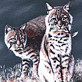 Bobcats In The Hood by DiDi Higginbotham