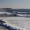 Bodega Bay Beach by Bob Phillips