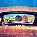 Bodie Through Car Window by Jill Battaglia
