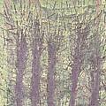 Bog Forms Through Fog  by Martin DeWitt