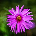 Bohemian Garden Pink by John Haldane