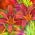 Bold And Beautiful Daylilies by Carol Groenen