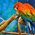 Bold Parrot by Liane Wright