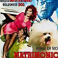 Bolognese Dog Art - Matrimonio All Italiana Movie Poster by Sandra Sij