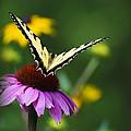 Bon Voyage Butterfly by Christina Rollo