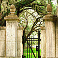 Bonaventure Cemetery Gate Savannah Ga by William Dey