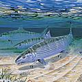 Bonefish Flats In002 by Carey Chen