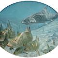 Bonefish Pursued By A Shark, 1972 by Stanley Meltzoff / Silverfish Press