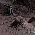 Bones At Mud Pot Area I I by Sharon Elliott