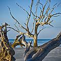 Boneyard Beach 3 by Carrie Cranwill