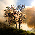 Bonfire And Olive Tree by Tim Holt