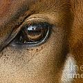 Bongo Skin Pattern by Frans Lanting MINT Images