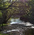 Bonne Femme Creek by Cricket Hackmann
