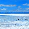 Bonneville Salt Flats After The Rain by Matthew Peek