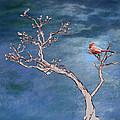 Bonsai Cardinal by John Haldane