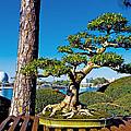 Bonsai by Greg Fortier
