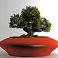 Bonsai by Tim Fillingim