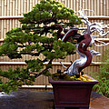 Bonsai Tree And Bamboo Fence by Elaine Plesser