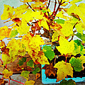 Bonsai Tree With Yellow Leaves by Joan Reese