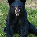 Boo-boo The Little Black Bear Cub by Brenda Jacobs