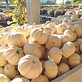 Boo Pumpkins by Kimberly Perry