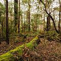 Boranup Forest - Western Australia by Daniel Carr