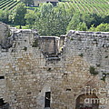 Bordeaux Castle Ruins With Vineyard by HEVi FineArt