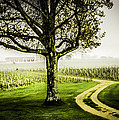 Bordeaux Vineyard by John Jack