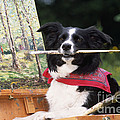 Border Collie At Painting Easel by John Daniels