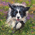 Border Collie by David Stribbling