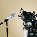 Border Collie Dog Singing by John Daniels