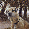 Border Terrier In The Woods by John Silver