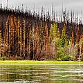 Boreal Forest At Yukon River Destroyed By Fire by Stephan Pietzko