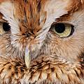 Boreal Owl Eyes  by Craig Voth