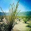 Borrego Desert by Kathlene Pizzoferrato