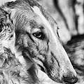 Borzoi Dog Portrait by Christian Lagereek