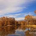 Bosque Del Apache Reflections by Mike  Dawson