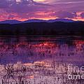 Bosque Sunset - Purple by Steven Ralser