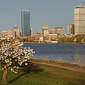 Boston Charles River On A Spring Day by Toby McGuire
