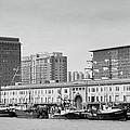 Boston Fishing Fleet by Paul Treseler