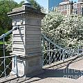 Public Garden - Boston Massachusetts by S Mykel Photography