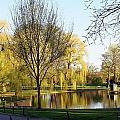 Boston Public Gardens by Jon Pierce
