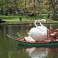 Boston Swan Boats by Barbara McDevitt