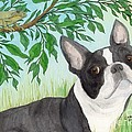 Boston Terrier Dog Tree Frog Cathy Peek Art by Cathy Peek
